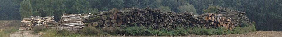 Waldbrief-Holzstapel-copyright-waldhueterin