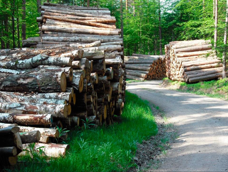 Waldbrief-2014-aus-Hessen-Bild-1