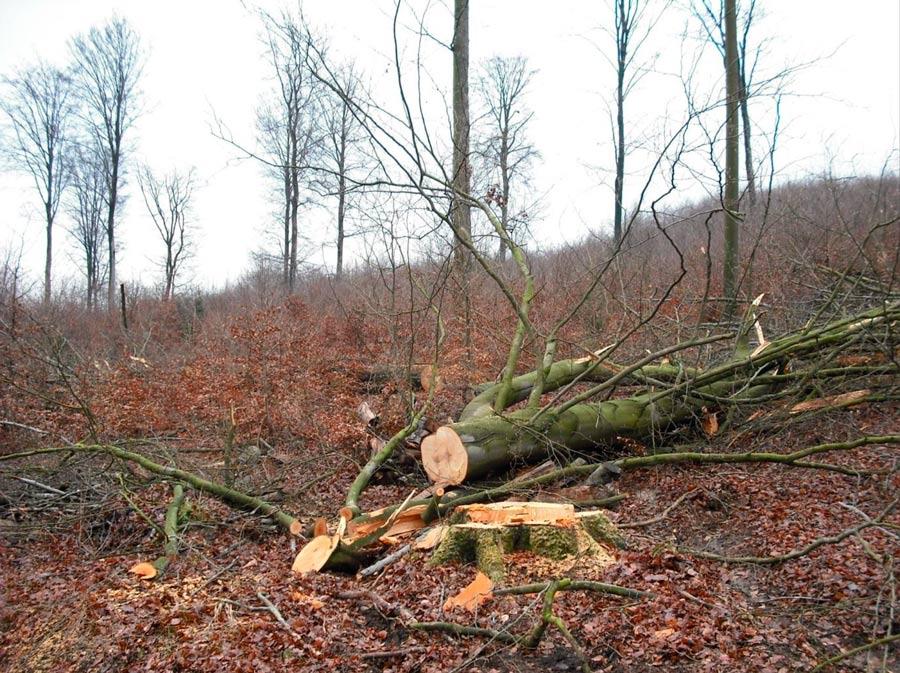 Waldbrief-2014-aus-Hessen-Bild-2