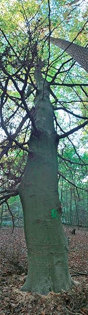 Waldhueterin-Aufruf-ringeln-stoppen-2